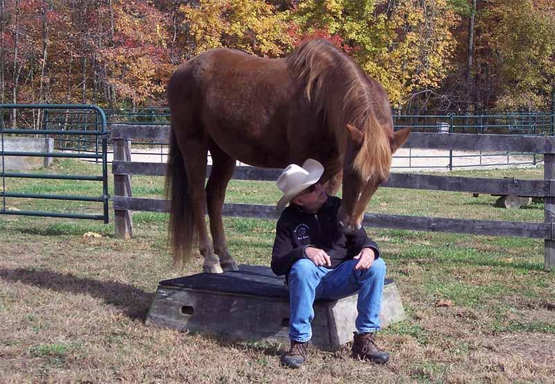 Horse clinics training in Alberta